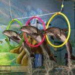 dubai-dolphinarium-dolphin-and-seal-show2