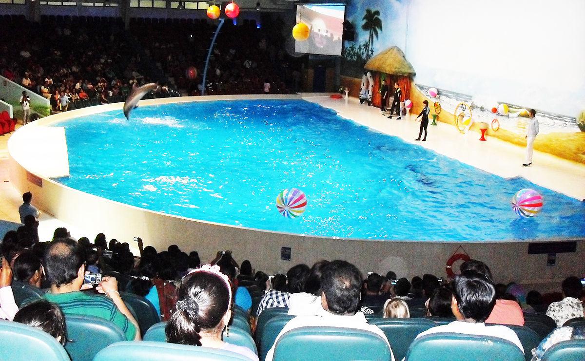 dubai-dolphinarium-dolphin-and-seal-show3