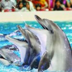 dubai-dolphinarium-dolphin-and-seal-show4