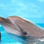 dubai-dolphinarium-dolphin-and-seal-show5