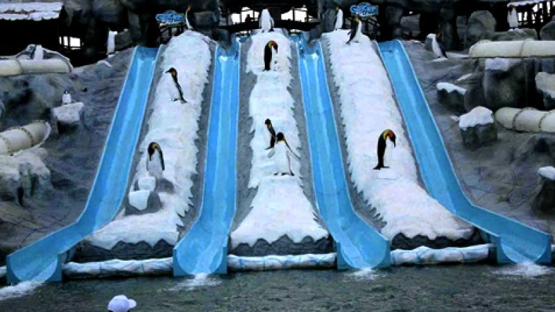 iceland-wterpark-ras-al-khaimah2