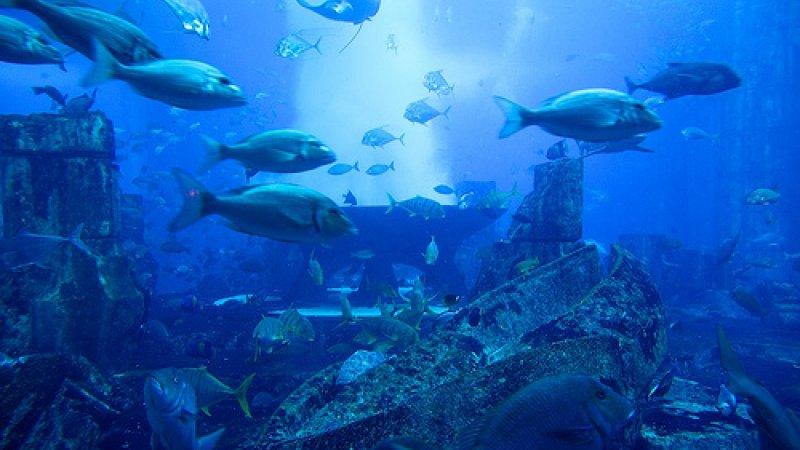 the-lost-chamber-aquaventure1